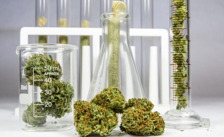 Cannabis para fins terapêuticos: todas as legislativas de notícias